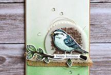 best birds - SU!
