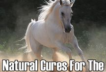 Horse RX and Misc. Info