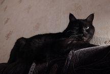 Черный кот Муся / про чёрного кота Мусю и немножко про других котов / Musia the Black Cat