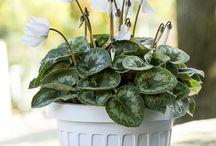 Creatività in vaso / Vasi originali per decorazioni e composizioni green creative e sorprendenti.