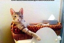 FUN: Cats Make the World Go Round
