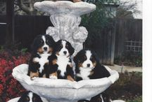 pups in a fountain