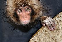 AnimalPhotography