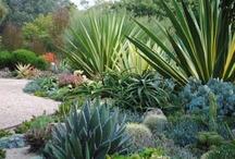 Going Green - Succulents