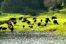 Thekkady Tour Packages / Dreamholidays offers best Thekkady tour packages which covers top attractive places to visit in Thekkady at low cost