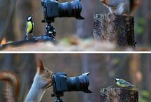 """Tiere """" HINTER"""" der Kamera"""