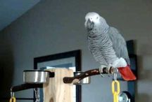 """Parrots / Probably should be called """"Parrotlets and Whatever Other Parrots Seemed Kinda Cute"""" / by Maiya Yu"""