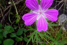Meglátogatandó helyek / fotók növényekről, virágokról