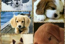 Funny & cute dogs