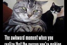funny / by Terena Hogan Welesko