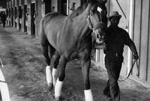 Horses - Race Horses