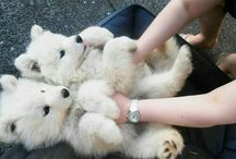 Animals That Can't Get Enough Of Belly Rubs
