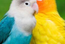 flying between colors