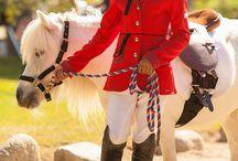 PONIES & HORSES