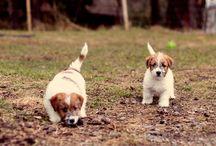 Eläinten hoito & kasvatus