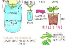 Herbs and Garden  / by Nicole St.Martin