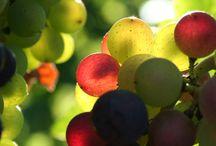 mi wine / Michigan wine and winery favorites.
