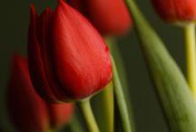 flowers as a soul