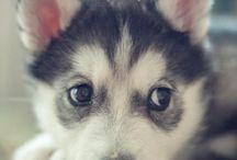 Cute adorable animals