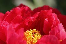 식물(꽃)(난색+백)