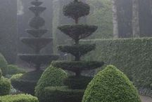 Formklipping av trær