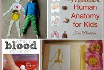 1 body/anatomy