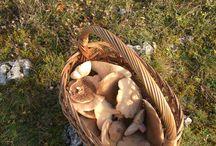 mushroom picking today