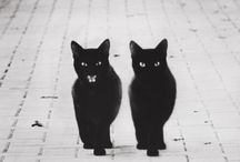 I love Cats, I can't help it / by Sharon Rohr