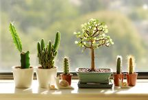 Home / Plant