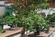 garden, bonsai