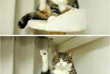 ohmygosh i love cats