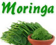"""Moringa-oleifera / Als """"Wunderbaum"""" wird Moringa nicht ohne Grund bezeichnet. Inzwischen mehr als 700 wissenschaftliche Studien zeigen den Baum und seine Blätter und Früchte als vielseitig gesundheitsförderlich. Besonders erstaunlich ist die antioxidative Wirkung der Blätter - sie ist wohl so hoch wie bei keiner anderen derzeit bekannten Pflanze oder Frucht.        http://world.my-moringa.com"""