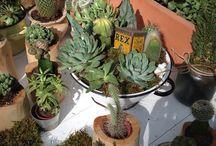 Bige Sualp I Succulent Arrangements
