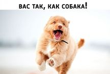 Гав-гав