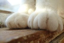 Cat Paws / by Kenji 08