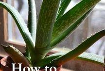 plante medicinale  ,sau folositoare in alt mod