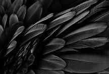 • black •