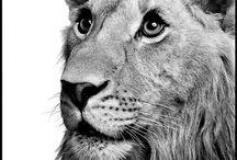 Animal instinct / Beautiful and wild creatures
