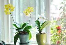 Exterior and Garden Ideas / by Amanda Aucoin