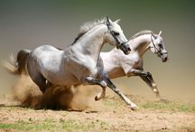 AnimalS_ HorseS