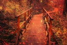 Festive fall / by Lene Hansen