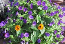 Greenhouse / Village Gardens offers a unique variety of annuals, magnificent hanging baskets, and a large selection of hand planted custom container combinations.