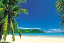 Beach - Coast / Photos on marine and coastal life, beach, seashells.