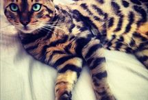 Cats with beautiful Markings
