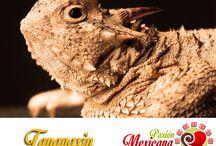 Animales mexicanos  / Les animaux qui habitent le Mexique
