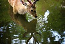 Animal beauty