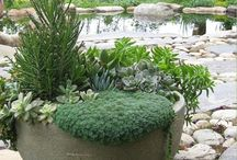 Garden and Patio Plans / by Alisha Phillips