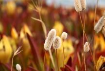 Natuur fotografie / Foto's van en over de natuur: dieren, bloemen, landschappen etc.