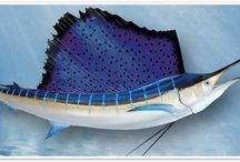 """Billfish Mounts from Gray Taxidermy / Our full size fish mounts are incredibly real looking and unmatched in the marine taxidermy industry. If you are looking for a trophy fish mount that is life like and resembeling the """"real thing"""", then let Gray Taxidermy produce your custom mount! If it's a sailfish mount, marlin fish mount, dolphin mount, a shark mount or any other salt or fresh water fish you want reproduced, you will find what you are looking for at Gray's.  We continue to deliver the absolute finest products and ou"""