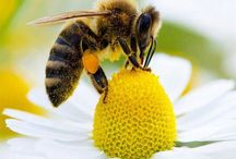 Honey Beeswax and a Healthier We